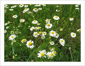 http://www.guillaud-traiteur.com/wp-content/uploads/2012/07/Marguerittes.jpg
