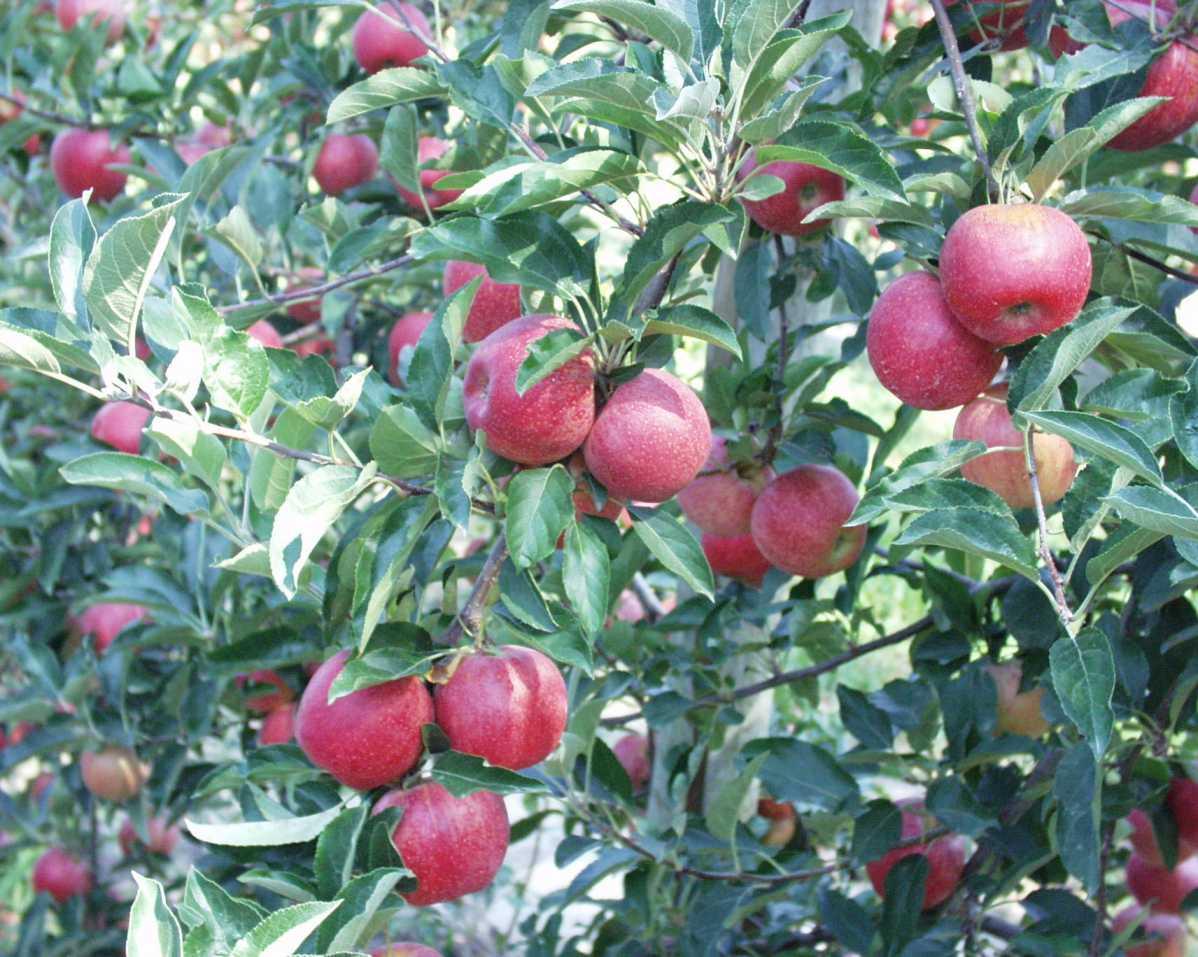 http://www.guillaud-traiteur.com/wp-content/uploads/2012/07/fruitierdauphinois2.jpg